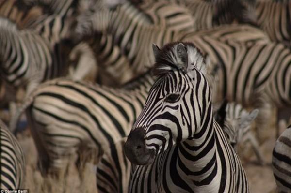 أفضل صور في مسابقة الحياة البرية بـ «لندن» 3910472534.jpg
