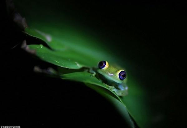أفضل صور في مسابقة الحياة البرية بـ «لندن» 3910472535.jpg