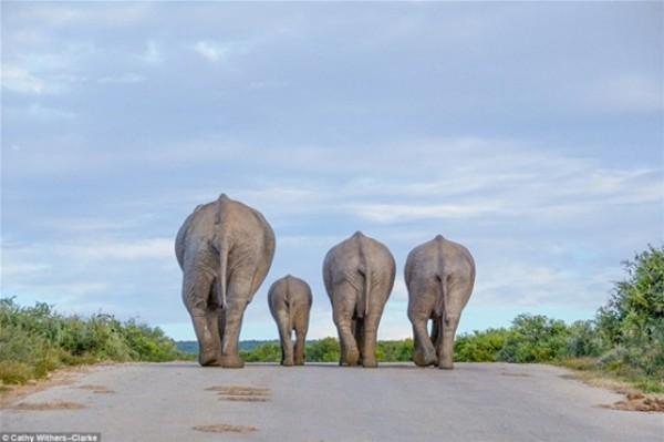 أفضل صور في مسابقة الحياة البرية بـ «لندن» 3910472537.jpg