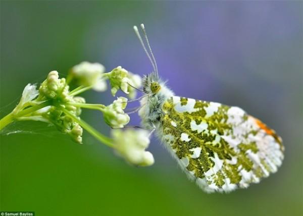 أفضل صور في مسابقة الحياة البرية بـ «لندن» 3910472539.jpg