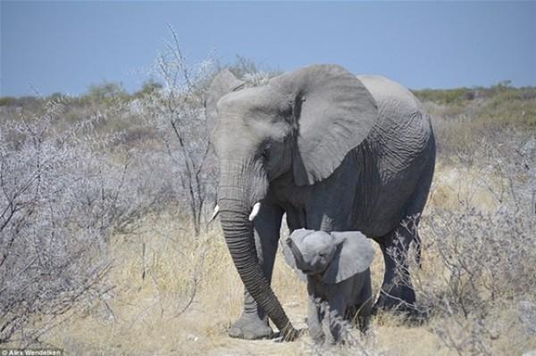 أفضل صور في مسابقة الحياة البرية بـ «لندن» 3910472540.jpg