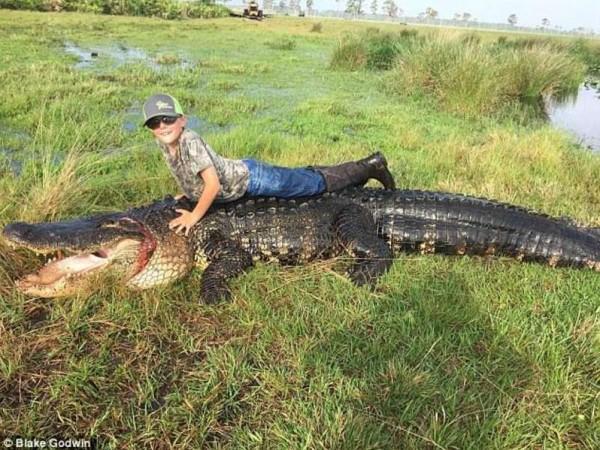 بالصور.. صيد تمساح عملاق بعد قتله العديد من أبقار مزرعة أمريكية