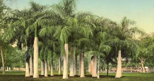 حدائق مصر قديمًا 3910779725