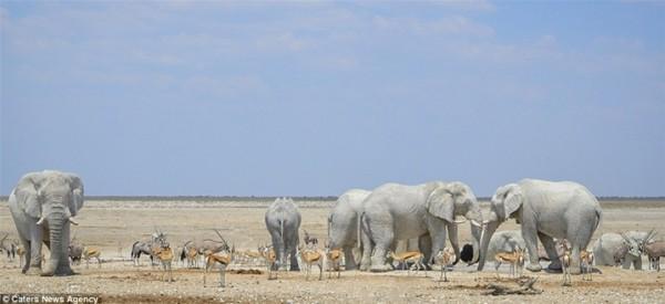 مُذهل .. فيلة تحمي أجسامها من الشمس بقناعها الخاص 3910862337
