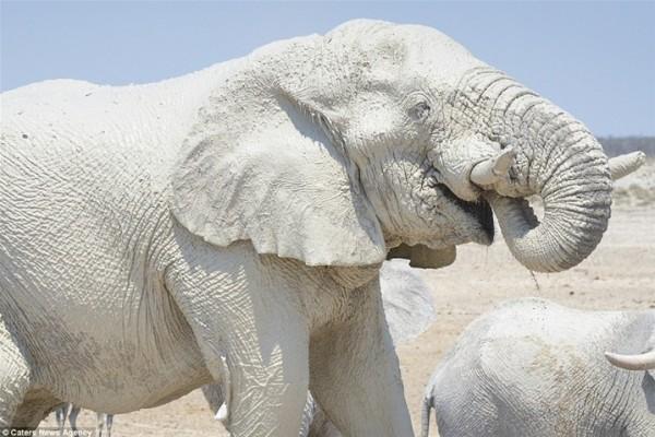 مُذهل .. فيلة تحمي أجسامها من الشمس بقناعها الخاص 3910862339