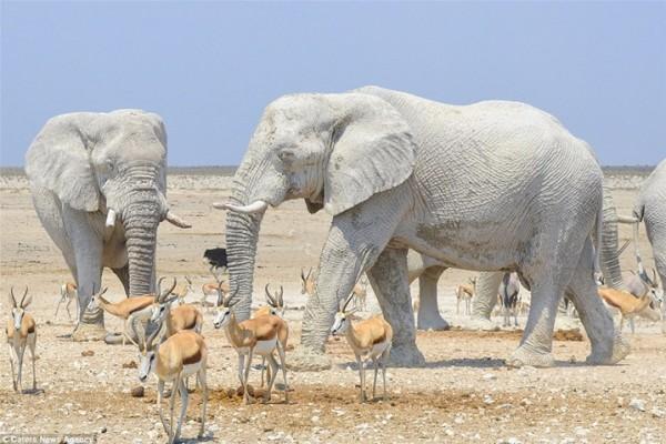 مُذهل .. فيلة تحمي أجسامها من الشمس بقناعها الخاص 3910862340