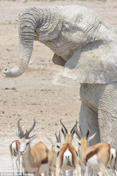 مُذهل .. فيلة تحمي أجسامها من الشمس بقناعها الخاص 3910862341