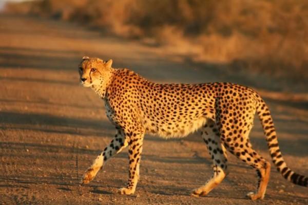 أسرع حيوانات كوكب الأرض