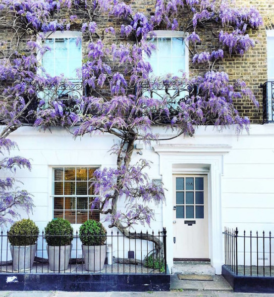 بريطانية توثق جمال واجهات المنازل في لندن
