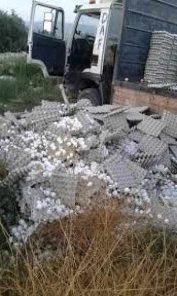 الضفة: مزارعون أتلفوا البيض بدل بيعه بالرخيص.. وفحوصات الوزارة كشفت الكثير