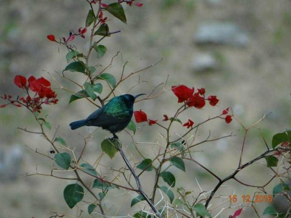 مصورتان توأم سحرهما حبّ الطبيعة وأسرارها وألوانها فوثقاه