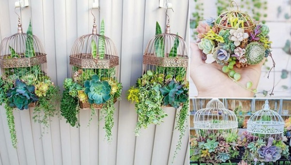 تشكيلات مدهشة للنباتات في المنزل 3911027560