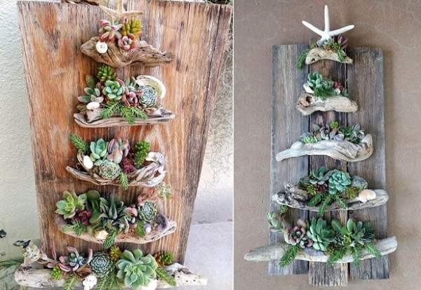 تشكيلات مدهشة للنباتات في المنزل 3911027562