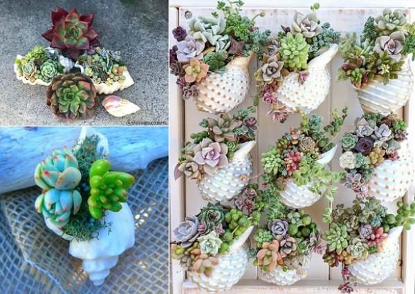 تشكيلات مدهشة للنباتات في المنزل 3911027563