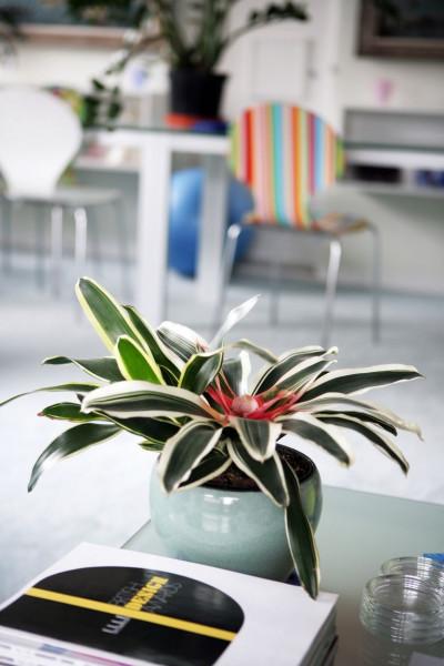 أجمل 10 نباتات زينة داخلية 3911140632