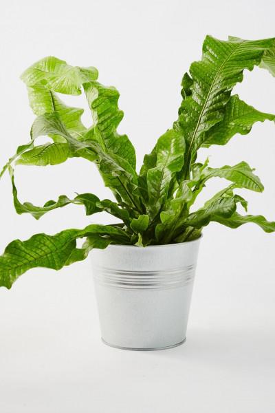 أجمل 10 نباتات زينة داخلية 3911140634