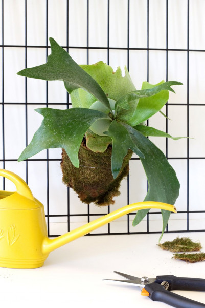 أجمل 10 نباتات زينة داخلية 3911140635