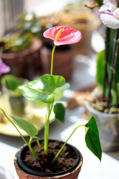 أجمل 10 نباتات زينة داخلية 3911140636