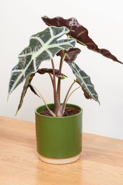 أجمل 10 نباتات زينة داخلية 3911140637
