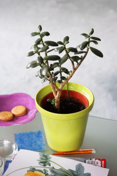 أجمل 10 نباتات زينة داخلية 3911140638