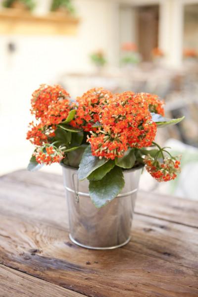 أجمل 10 نباتات زينة داخلية 3911140639