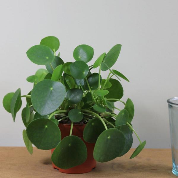 أجمل 10 نباتات زينة داخلية 3911140640