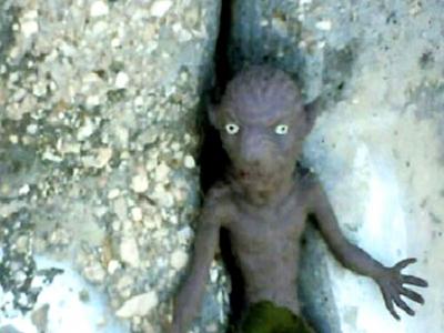 صورة لمخلوق غريب يظهر على كورنيش الدوحة في قطر