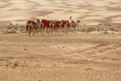 محمية منتجع المها صحراوية في دبي تجتذب اغني اغنياء العالم