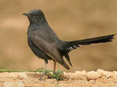 نوع نادر من الطيور فى الاردن 9998296511