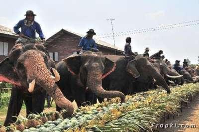 بالصور.. الاحتفال بعيد الفيل تايلاند 9998301288.jpg
