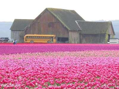 مزارع صور رووووعة 9998305541.jpg