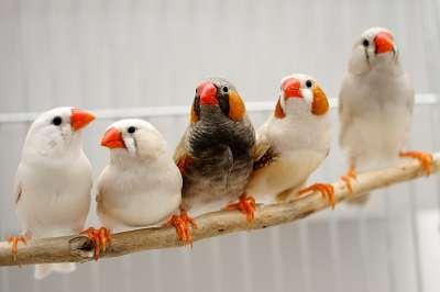 اسباب تغريد الطيور عند الفجر 9998309977.jpg