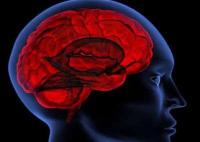 الدماغ أداءه- أداء المخ