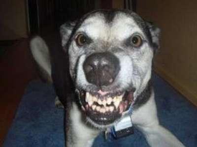 نصائح في حال هاجمك كلب أو عرفت أنه سيهاجمك | دنيا الوطن