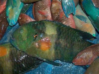 أنواع الأسماك بالصور 9998318221.jpg