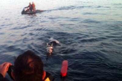 حصان يسبح 3 ساعات متواصلة بعرض البحر قبل إنقاذه