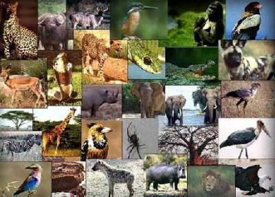 من اسرار عالم الحيوان