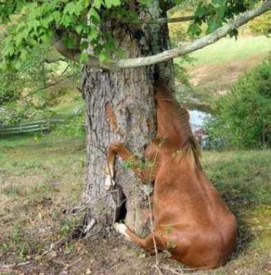 شجرة متوحشة تأكل كل شي يقترب منها
