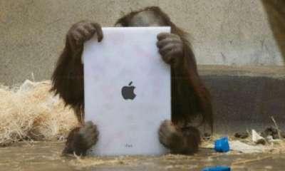حديقة حيوان تدرب قردتها على استخدام الآيباد
