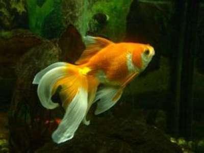 الأسماك أيضا تصاب بسرطان الجلد