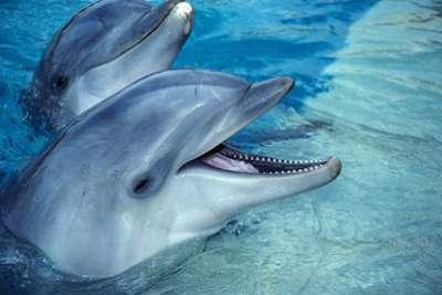 حقائق مذهلة الدلافين الأروع بكثير نتخيل