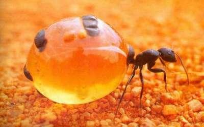 العسل 9998340131.jpg