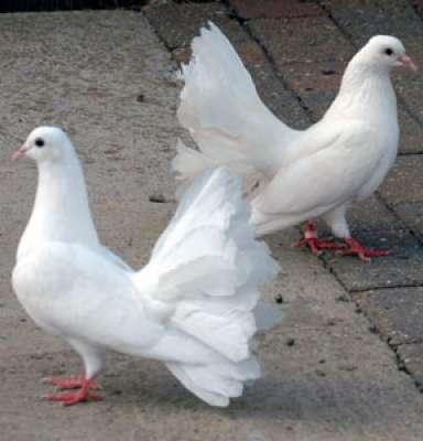 طيور الحمام قادرة الحساب والعد والتمييز الأرقام