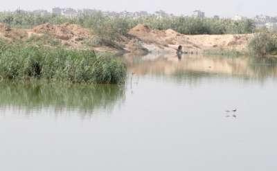 تمساح في أحواض الصرف الصحي شمال غزة يهدد حياة المواطنين