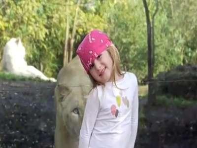 بالصور والفيديو.. طفلة أمام لبوة وجهاً لوجه في حديقة حيوان فرنسية