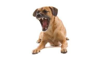 كيف تحد من نباح كلبك؟