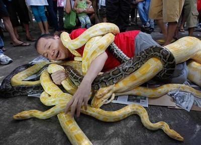 بالصور… رجل يلف مجموعة من الثعابين حوله احتفالا بالعام الجديد