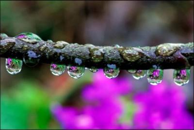 لأجمل لقطات وصور قطرات المطر تداعب الطبيعه للعام 2013 9998359593.jpg