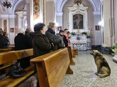 الكلب الذي أصبح على كل لسان بوفائه لصاحبته الميتة