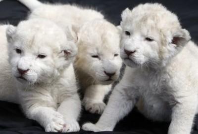 أغلى حيوانات العالم